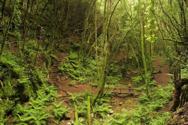 Bosque laurisilva isla de La Palma